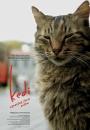 Kedi - sekretne życie kotów - plakat